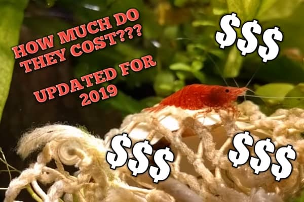 How Much Do Cherry Shrimp Cost? Updated for 2019 – Pet